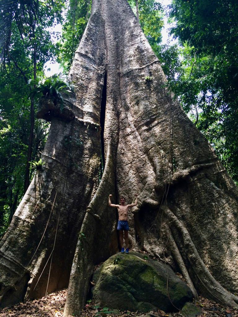Дерево в обхвате 35 метров, в высоту 45. Так написано. Чувствуешь себя щепкой рядом с ним.